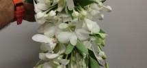 Dendrobium e Bovardia